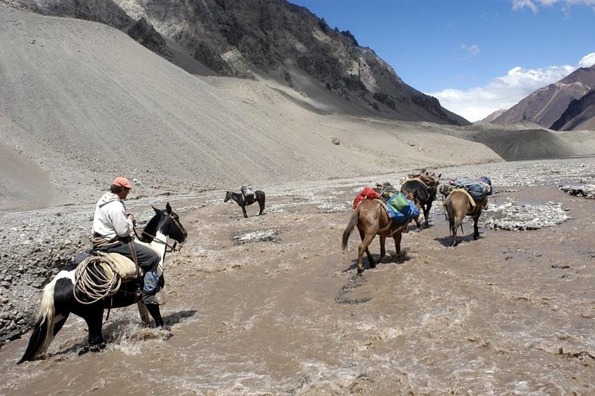Mules climbing Aconcagua